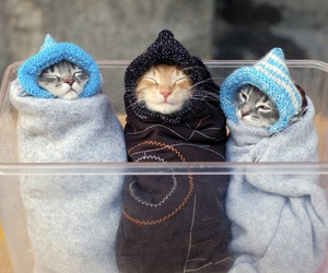 beauty, kawaii, and little cat image