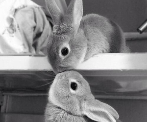cute, kiss, and bunny image