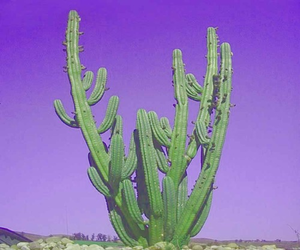 cactus, purple, and green image