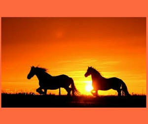 sooo pretty and horses run in the sunset image