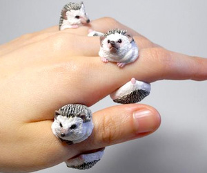 hedgehog, ring, and accesorio image