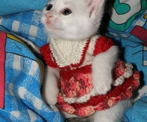 cute, cat, and dress image