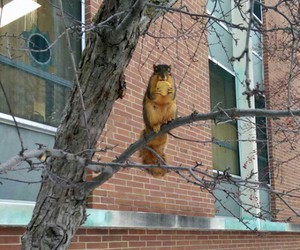 animals, squirrels, and stealing image