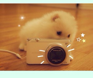 adorable, camera, and dog image