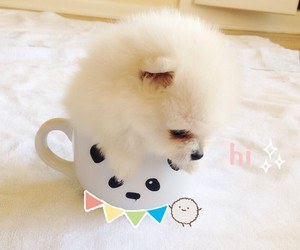 adorable, cup, and dog image
