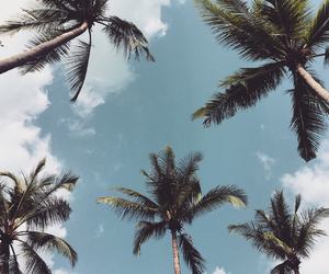 palmtrees, sky, and thailand image