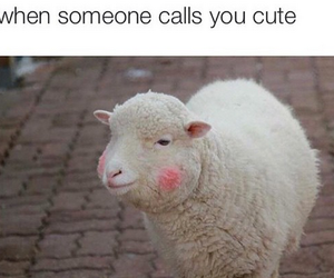 funny, cute, and lol image