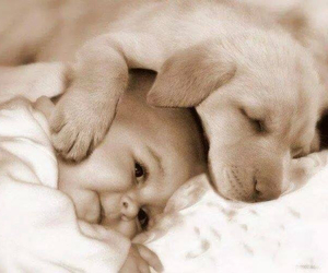 animals, baby, and cute image