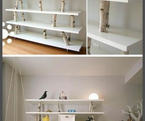 nature and shelves image