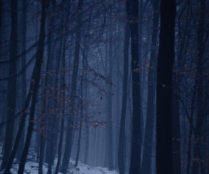 forest and night image