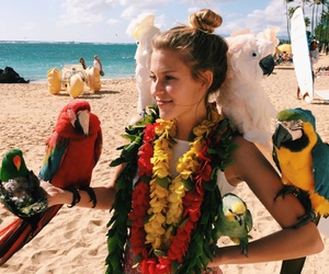 summer, beach, and parrots image