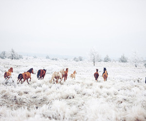field, running, and horses image