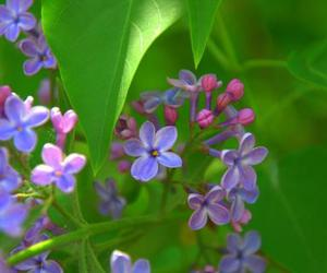 flowers, green, and lilac image