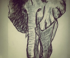 draw, drawing, and elefant image
