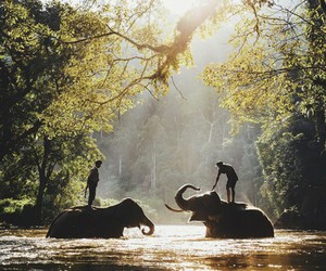 elephant, nature, and animal image