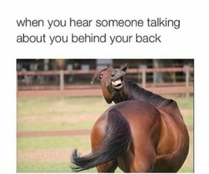 funny, horse, and lol image