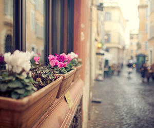 flowers, street, and photography image