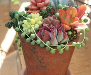 lovely, succulents, and cute image