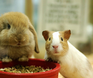 bunny, share, and guinea pig image