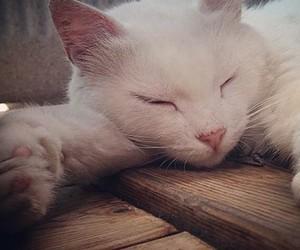 blanco, gatitos, and Gatos image