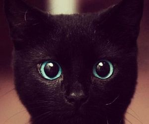 black and white, cat, and blues eyes image