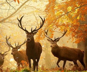 deer, autumn, and animal image