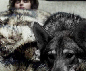 game of thrones, bran stark, and summer image