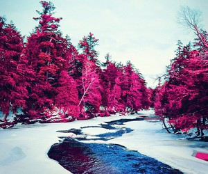 beautiful, nature, and pink image
