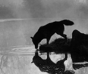 wolf, animal, and lake image