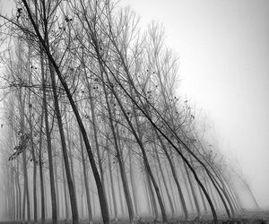 black and white, photography, and trees image
