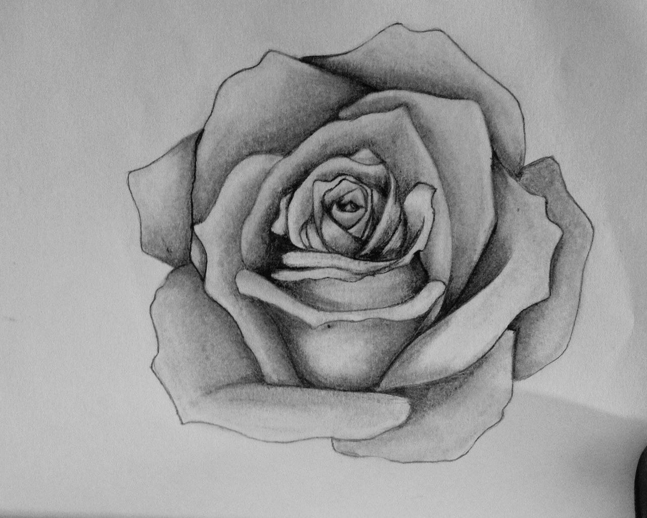 Rose for How to draw a black and white rose