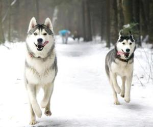 animals, happy, and dogs image