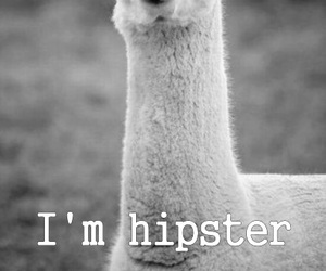 hipster, lol, and black and white image