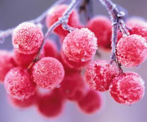 winter, berries, and red image