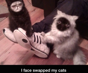 funny, cats, and face image