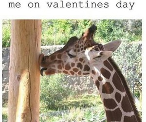 funny and giraffe image