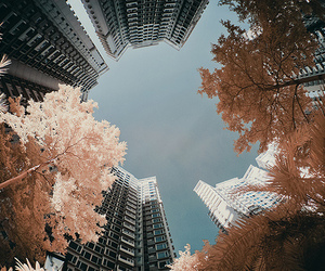 city, photography, and tree image