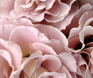 flowers, peonies, and trends image