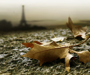 paris and leaves image