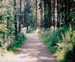35mm, green, and nature image
