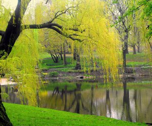 beautiful, Central Park, and lake image