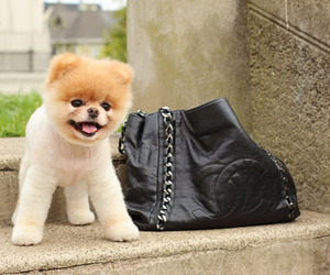 bag, cute, and chanel image