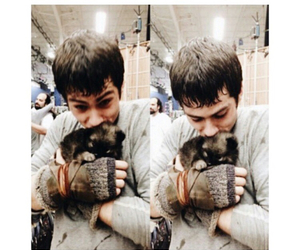 puppies and dylan o'brien image