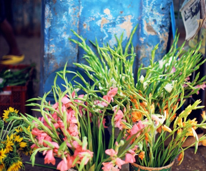 flowers, summer, and vacation image