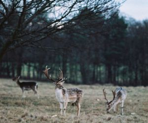deer, forest, and landscape image