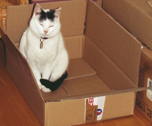 carton, pistache, and chat image