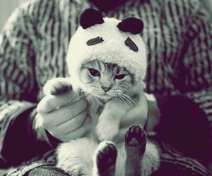 cat, cute, and panda image