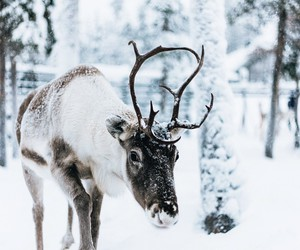 animal, horns, and cute image
