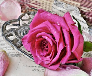 pink, rose, and vintage image