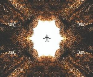 avion, belleza, and bosque image
